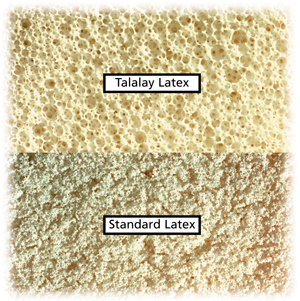 latex vs talalay latex